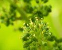 ブドウ栽培とワイン醸造